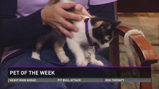 Pet of the Week: Cocoa