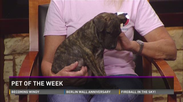 Pet of the week: Faris