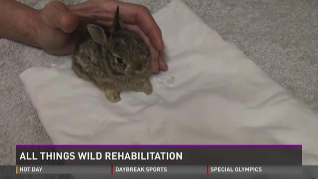 All Things Wild Rehabilitation