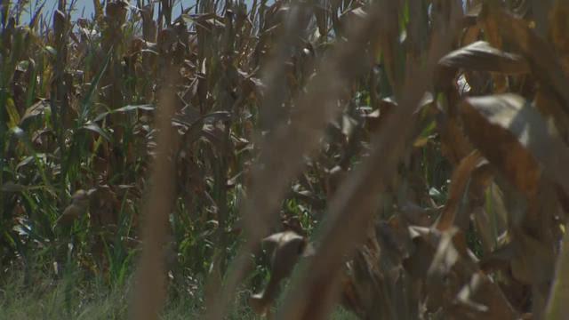 El Nino: destructive, but a positive for economy, farming
