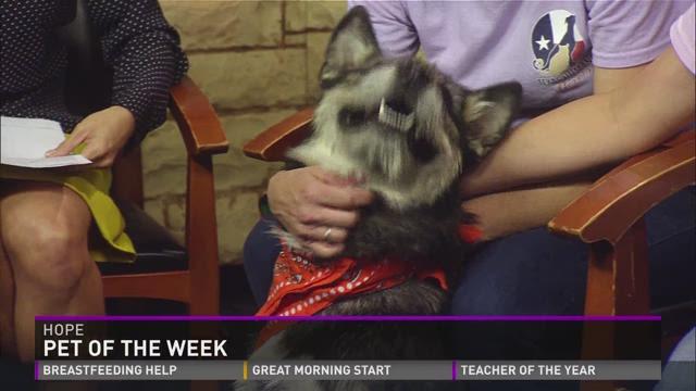 Pet of the Week - Hope
