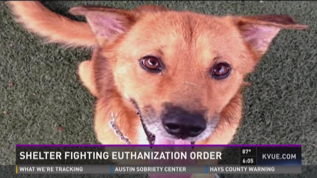 Judge rules rescue dog that bit child must be euthanized